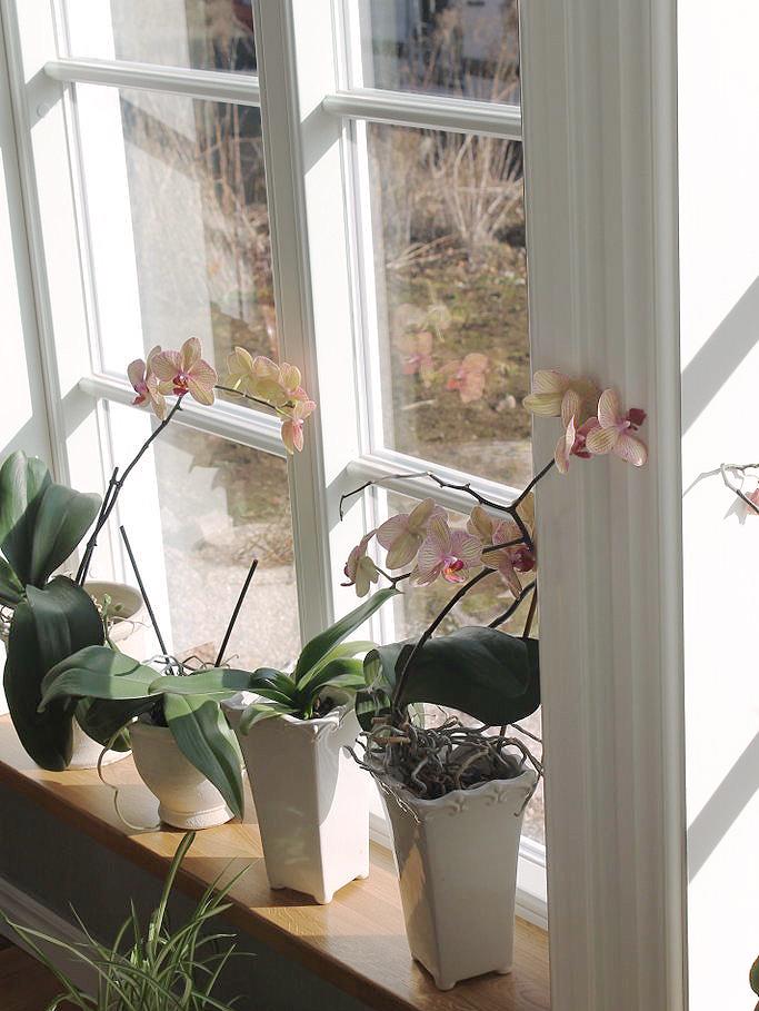 En närmare titt på ett fast Sverige104 fönster med äkta wienerspröjs i trä. De vackra orchideerna är bara en bonus.
